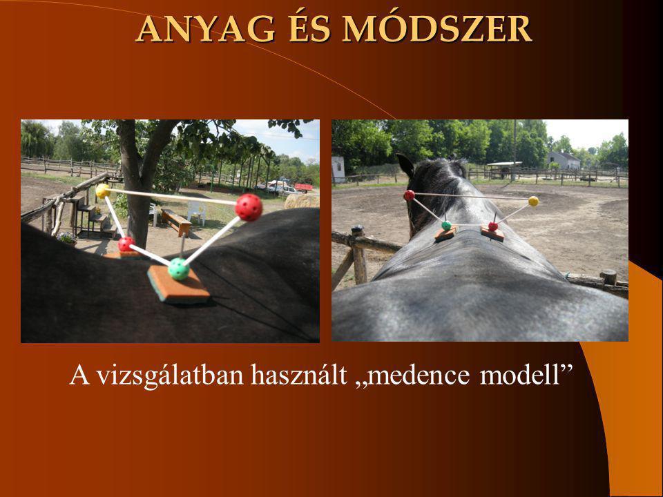 """ANYAG ÉS MÓDSZER A vizsgálatban használt """"medence modell"""""""