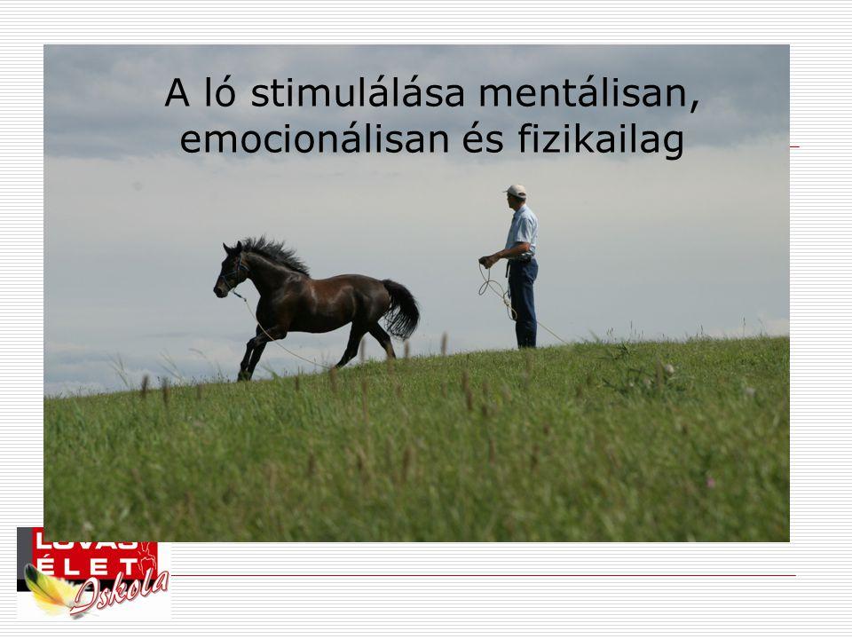 A ló stimulálása mentálisan, emocionálisan és fizikailag