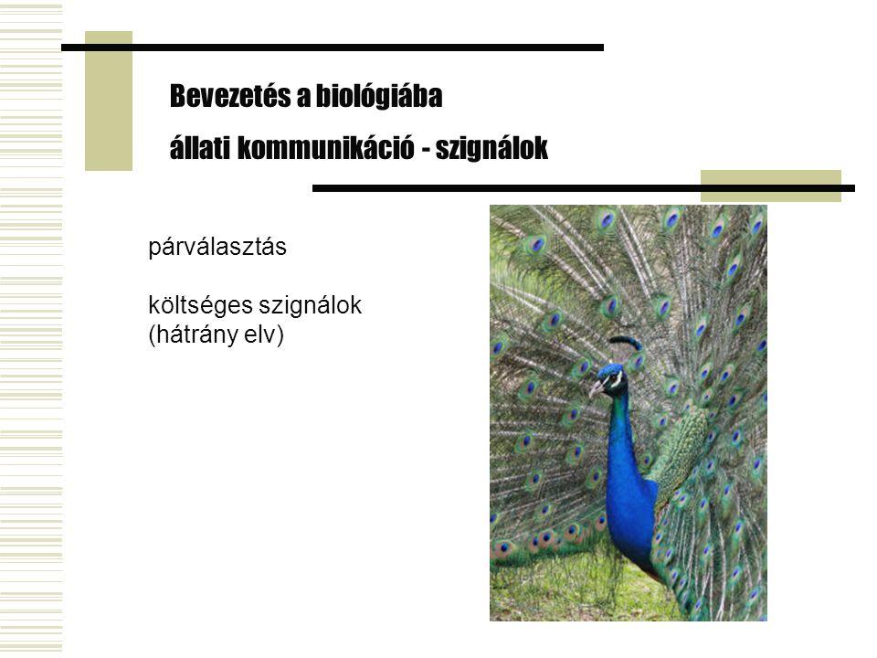 Bevezetés a biológiába állati kommunikáció - szignálok párválasztás költséges szignálok (hátrány elv)