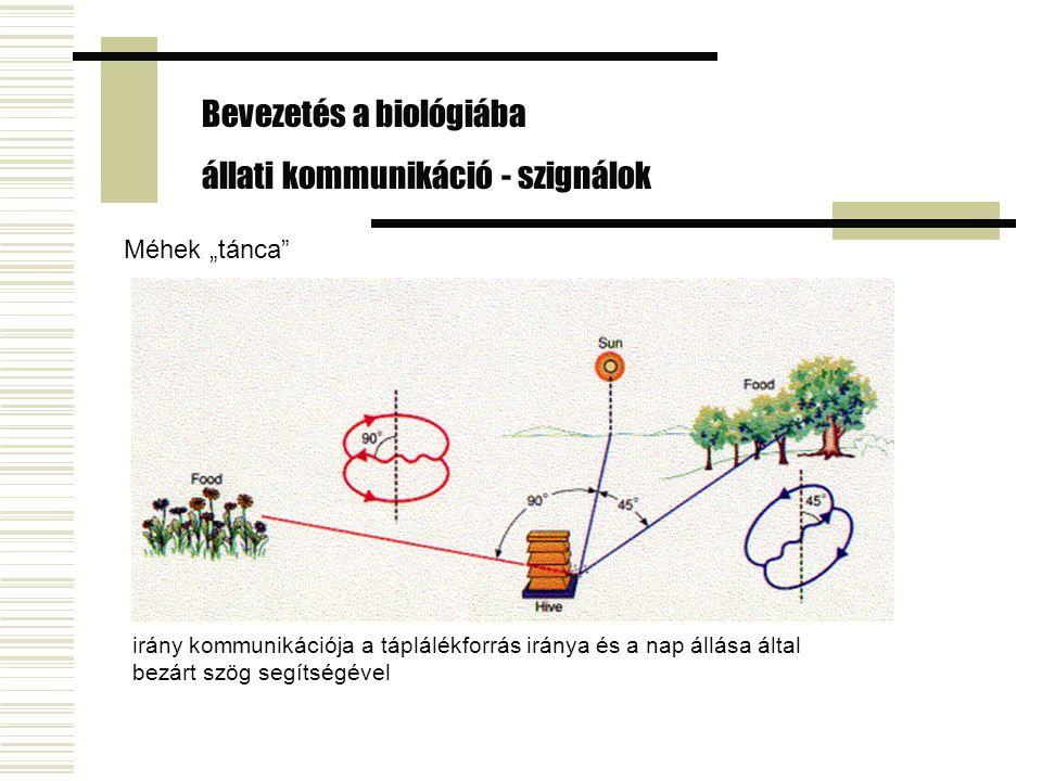 """irány kommunikációja a táplálékforrás iránya és a nap állása által bezárt szög segítségével Méhek """"tánca"""" Bevezetés a biológiába állati kommunikáció -"""