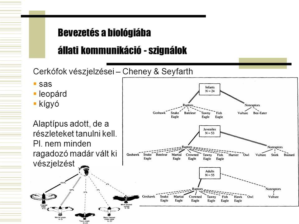 Cerkófok vészjelzései – Cheney & Seyfarth Bevezetés a biológiába állati kommunikáció - szignálok  sas  leopárd  kígyó Alaptípus adott, de a részlet
