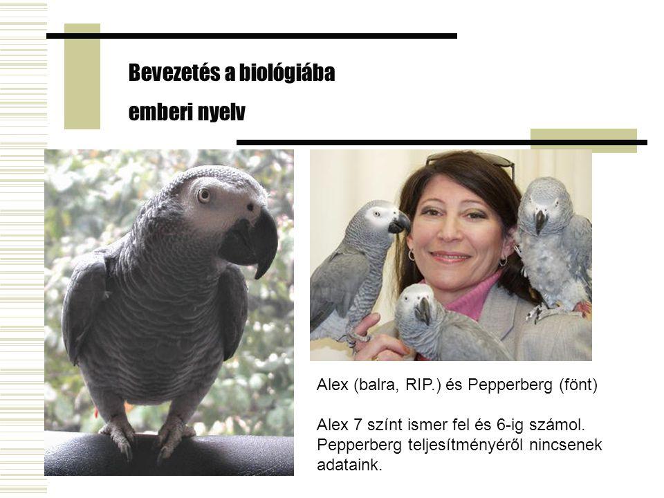 Alex (balra, RIP.) és Pepperberg (fönt) Alex 7 színt ismer fel és 6-ig számol. Pepperberg teljesítményéről nincsenek adataink. Bevezetés a biológiába