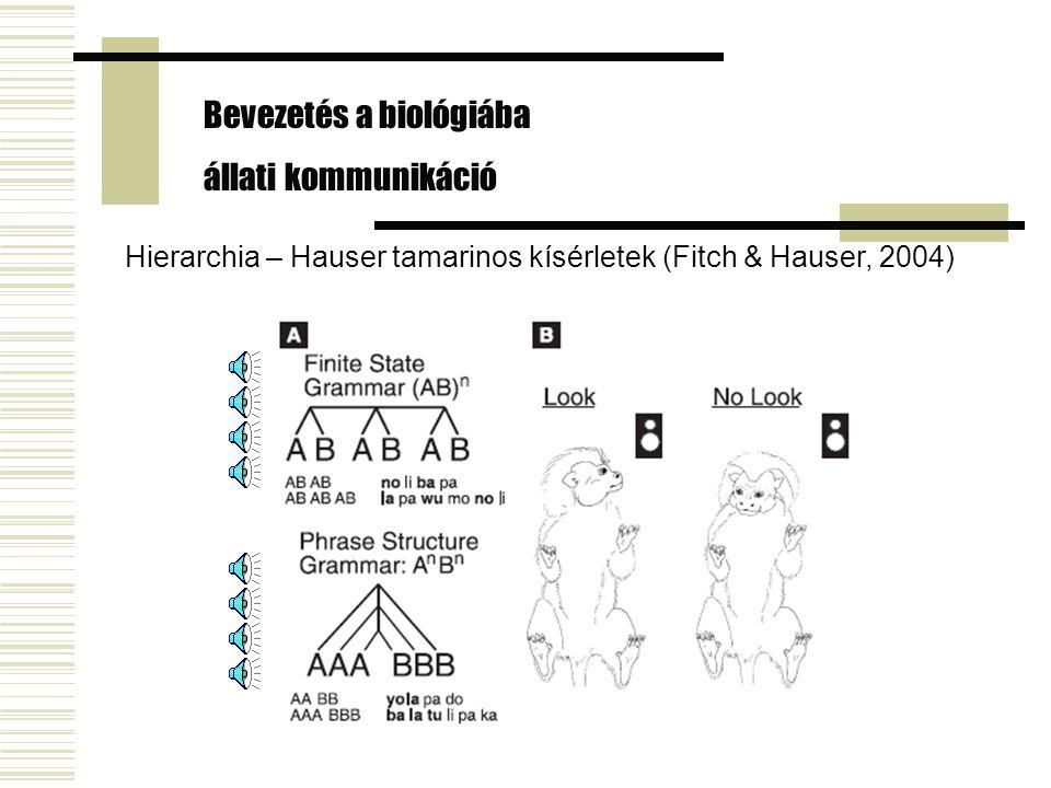 Hierarchia – Hauser tamarinos kísérletek (Fitch & Hauser, 2004) Bevezetés a biológiába állati kommunikáció