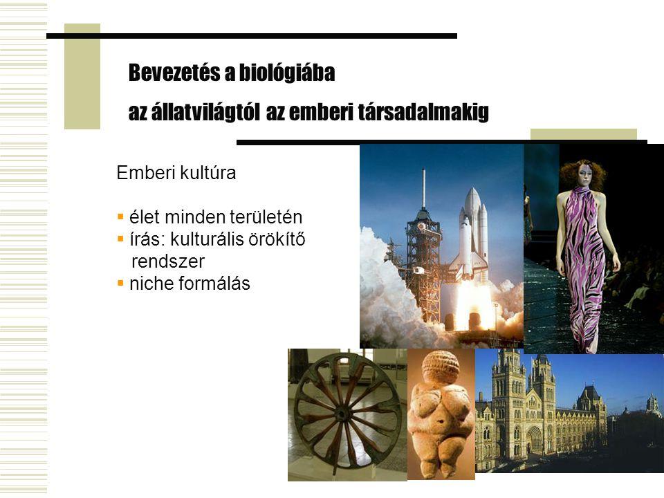 Emberi kultúra  élet minden területén  írás: kulturális örökítő rendszer  niche formálás Bevezetés a biológiába az állatvilágtól az emberi társadal