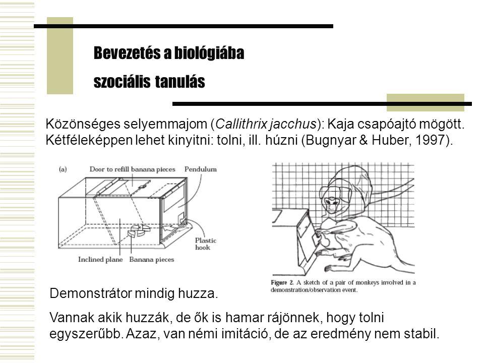 Bevezetés a biológiába szociális tanulás Közönséges selyemmajom (Callithrix jacchus): Kaja csapóajtó mögött. Kétféleképpen lehet kinyitni: tolni, ill.