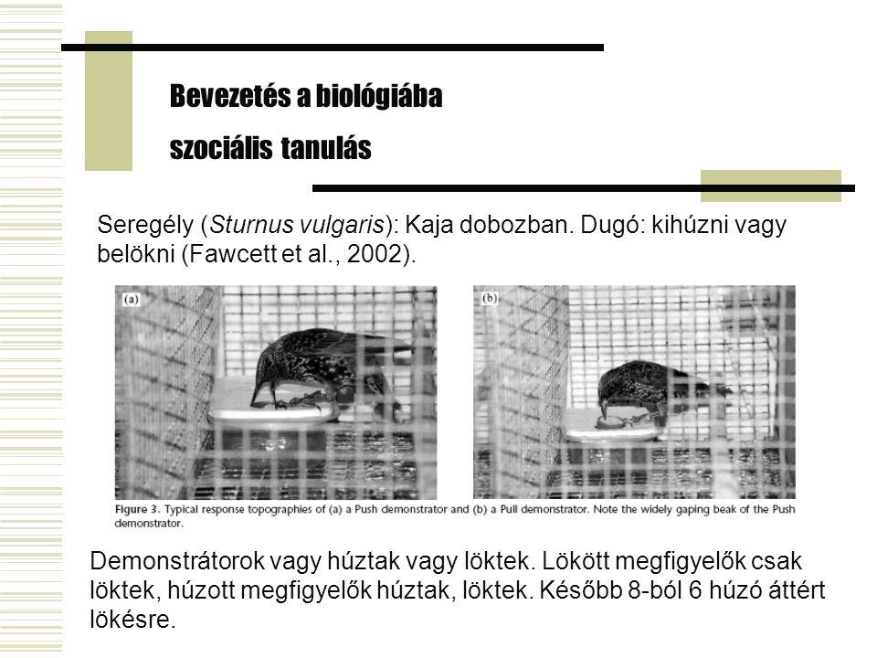 Seregély (Sturnus vulgaris): Kaja dobozban. Dugó: kihúzni vagy belökni (Fawcett et al., 2002). Bevezetés a biológiába szociális tanulás Demonstrátorok