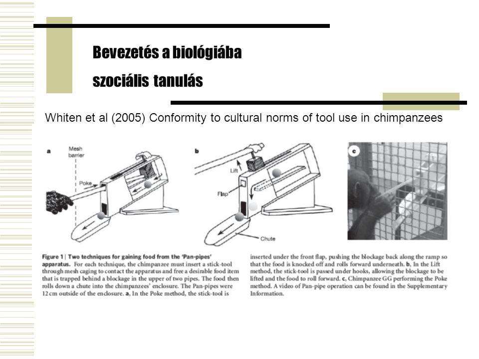 Whiten et al (2005) Conformity to cultural norms of tool use in chimpanzees Bevezetés a biológiába szociális tanulás