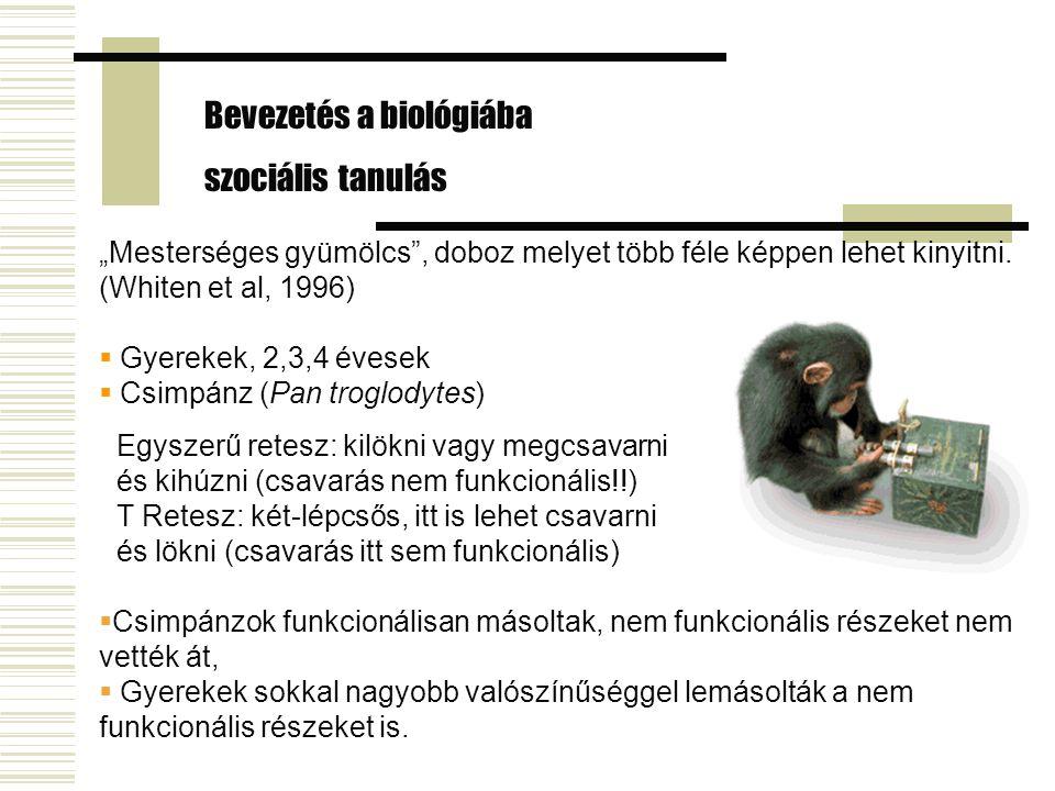 """""""Mesterséges gyümölcs"""", doboz melyet több féle képpen lehet kinyitni. (Whiten et al, 1996)  Gyerekek, 2,3,4 évesek  Csimpánz (Pan troglodytes) Bevez"""