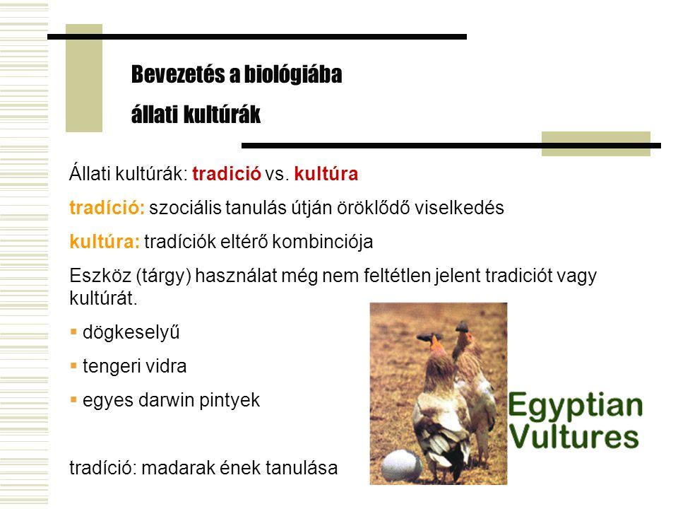 Állati kultúrák: tradició vs. kultúra tradíció: szociális tanulás útján öröklődő viselkedés kultúra: tradíciók eltérő kombinciója Eszköz (tárgy) haszn