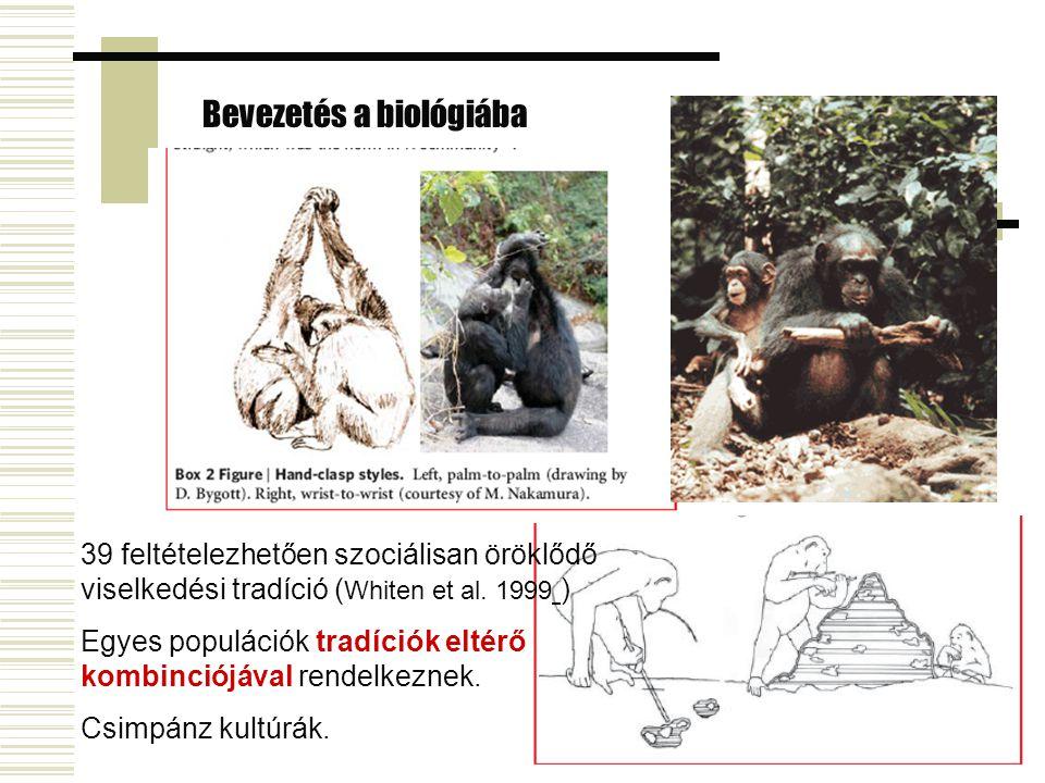 Bevezetés a biológiába állati kultúrák 39 feltételezhetően szociálisan öröklődő viselkedési tradíció ( Whiten et al. 1999 ) Egyes populációk tradíciók
