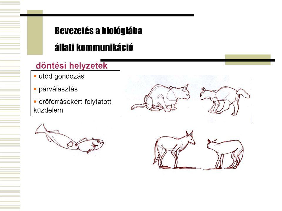 Bevezetés a biológiába állati kommunikáció döntési helyzetek  utód gondozás  párválasztás  erőforrásokért folytatott küzdelem