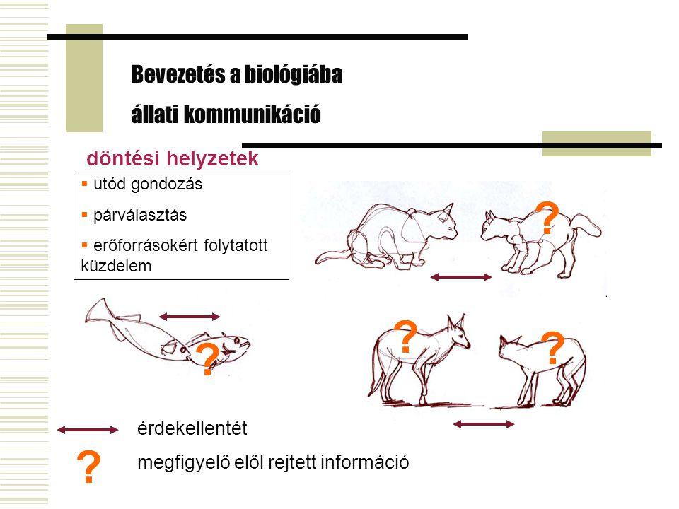 Cerkófok vészjelzései – Cheney & Seyfarth Bevezetés a biológiába állati kommunikáció - szignálok  sas  leopárd  kígyó Alaptípus adott, de a részleteket tanulni kell.
