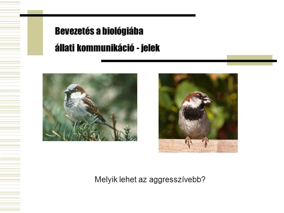 Bevezetés a biológiába állati kommunikáció - jelek Melyik lehet az aggresszívebb?