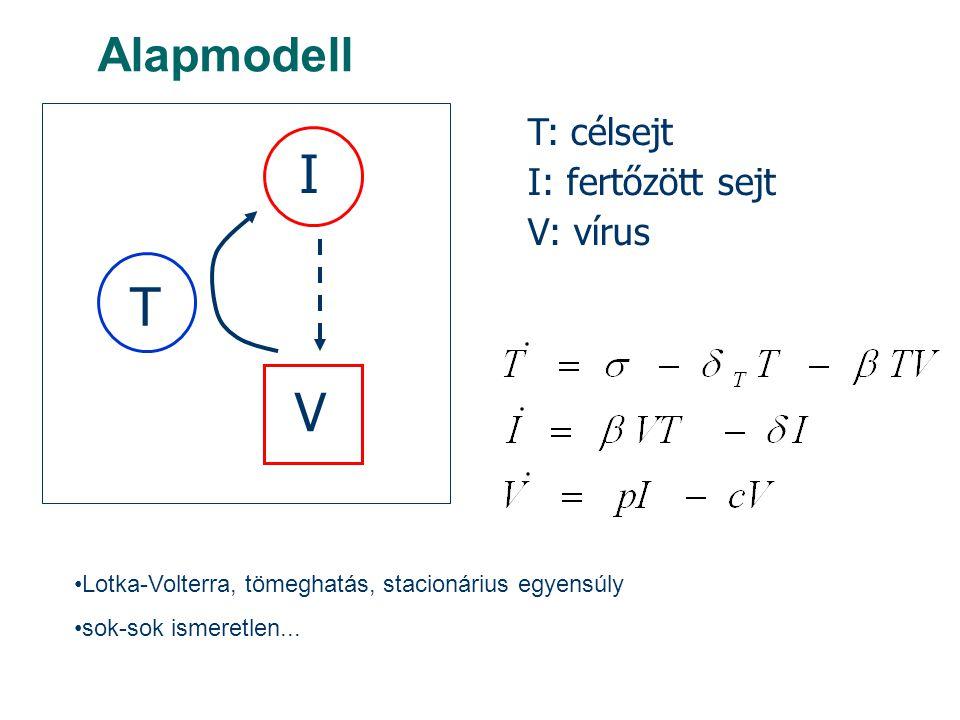Alapmodell T I V T: célsejt I: fertőzött sejt V: vírus Lotka-Volterra, tömeghatás, stacionárius egyensúly sok-sok ismeretlen...