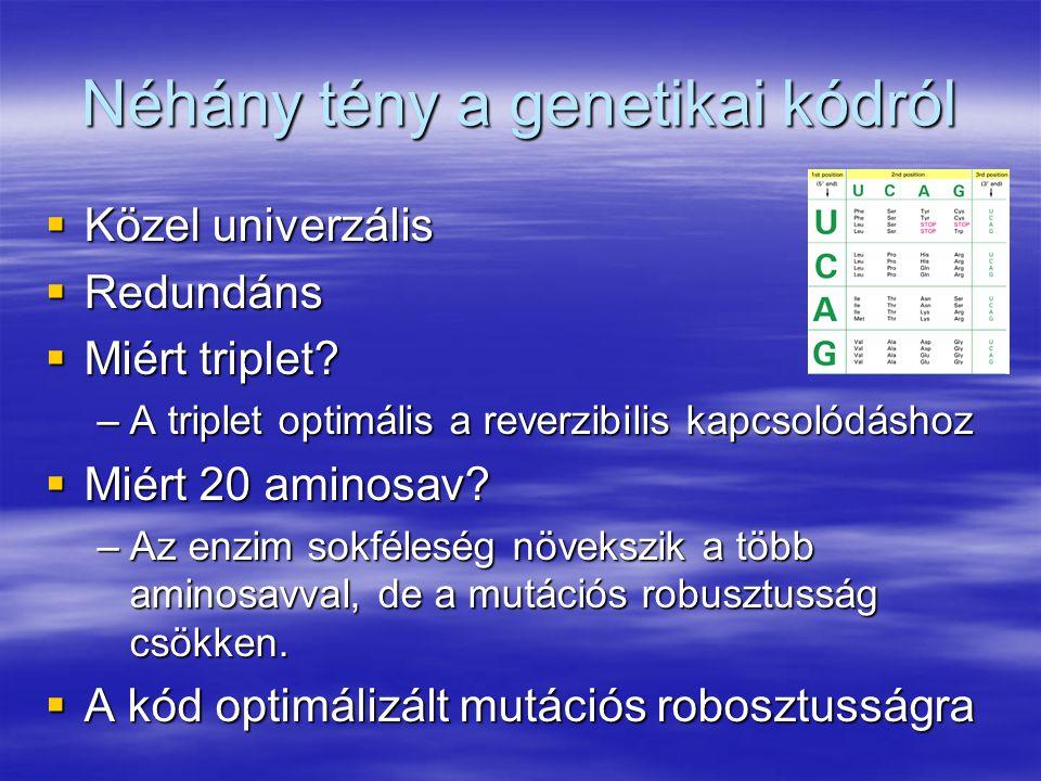 Néhány tény a genetikai kódról  Közel univerzális  Redundáns  Miért triplet? –A triplet optimális a reverzibilis kapcsolódáshoz  Miért 20 aminosav