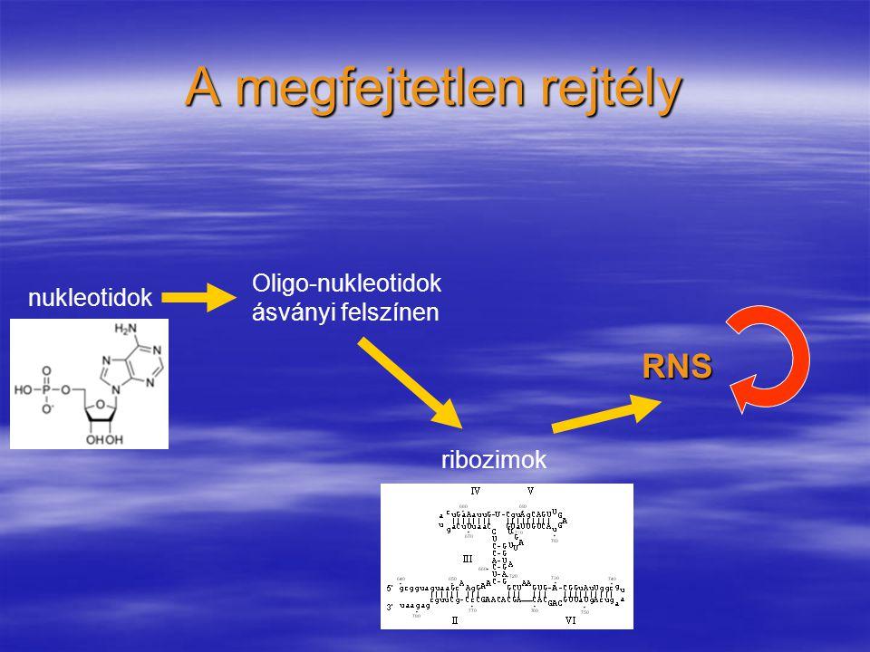 A megfejtetlen rejtély RNS Oligo-nukleotidok ásványi felszínen nukleotidok ribozimok