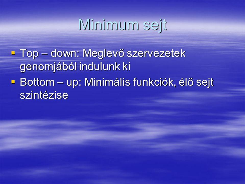 Minimum sejt  Top – down: Meglevő szervezetek genomjából indulunk ki  Bottom – up: Minimális funkciók, élő sejt szintézise