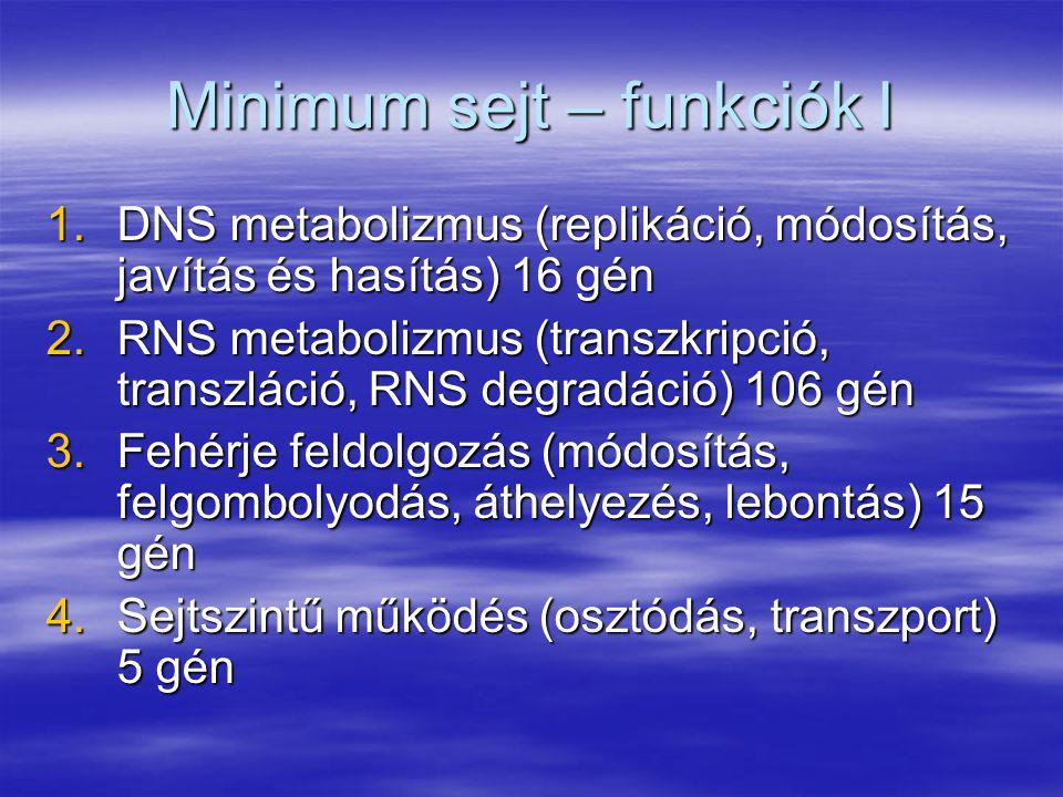 Minimum sejt – funkciók I 1.DNS metabolizmus (replikáció, módosítás, javítás és hasítás) 16 gén 2.RNS metabolizmus (transzkripció, transzláció, RNS de
