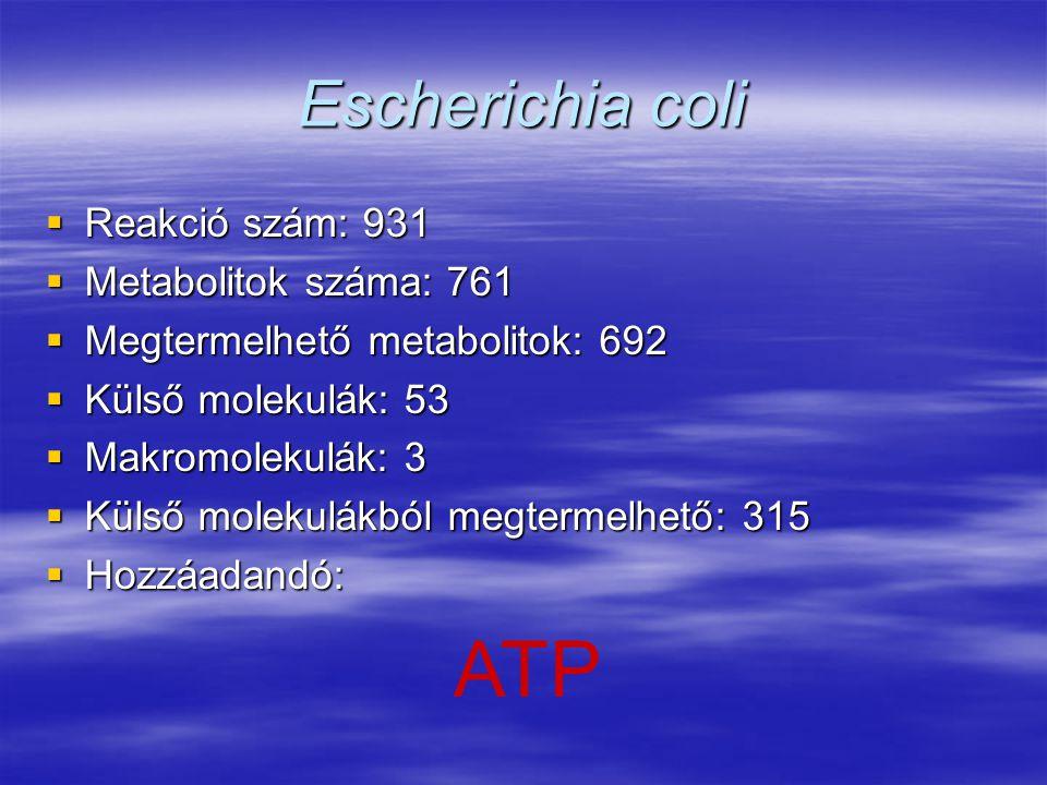 Escherichia coli  Reakció szám: 931  Metabolitok száma: 761  Megtermelhető metabolitok: 692  Külső molekulák: 53  Makromolekulák: 3  Külső molek