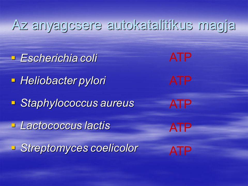 Az anyagcsere autokatalitikus magja  Escherichia coli  Heliobacter pylori  Staphylococcus aureus  Lactococcus lactis  Streptomyces coelicolor ATP