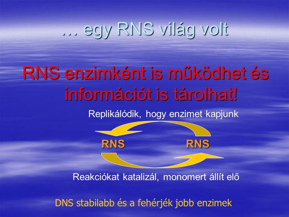… egy RNS világ volt RNS enzimként is működhet és információt is tárolhat! DNS stabilabb és a fehérjék jobb enzimek RNS Replikálódik, hogy enzimet kap