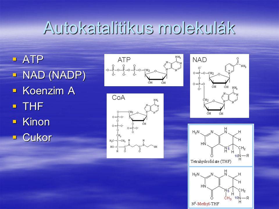 Autokatalitikus molekulák  ATP  NAD (NADP)  Koenzim A  THF  Kinon  Cukor ATP CoA NAD
