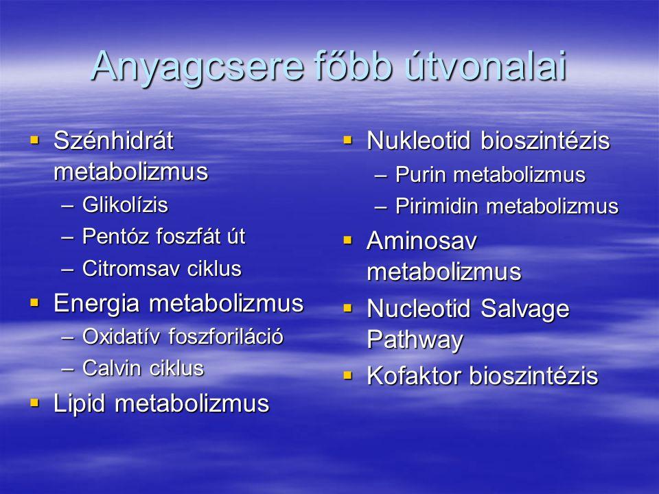  Szénhidrát metabolizmus –Glikolízis –Pentóz foszfát út –Citromsav ciklus  Energia metabolizmus –Oxidatív foszforiláció –Calvin ciklus  Lipid metab