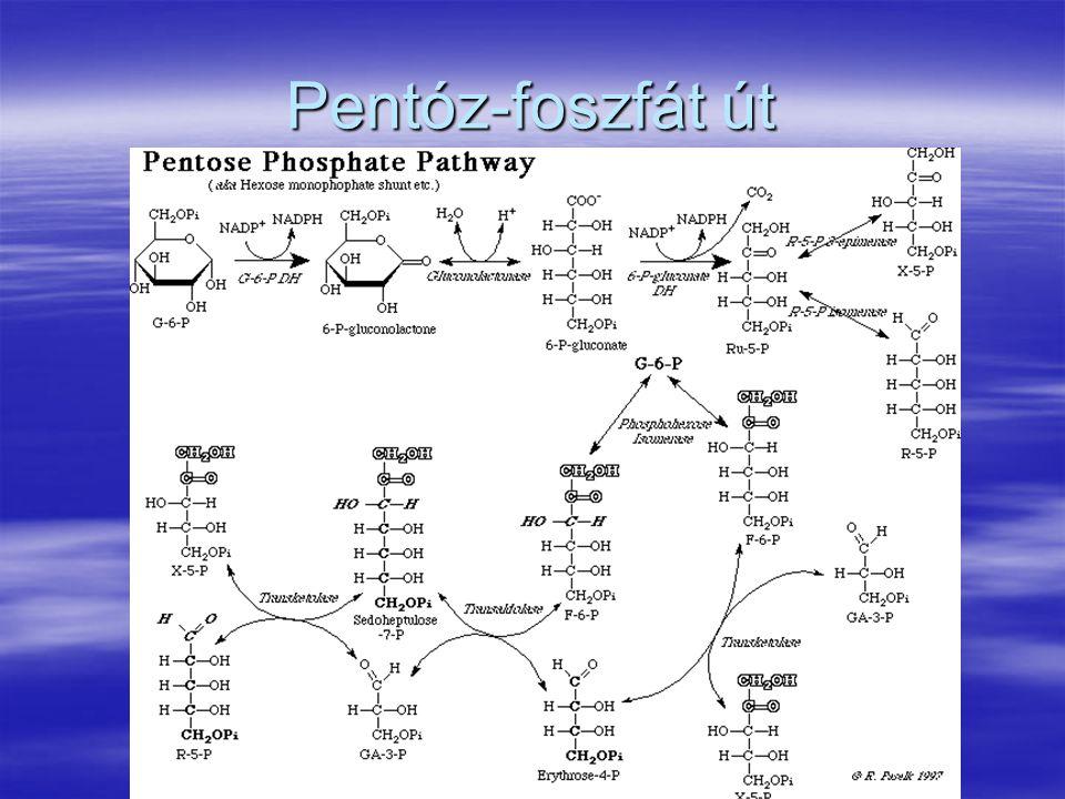 Pentóz-foszfát út