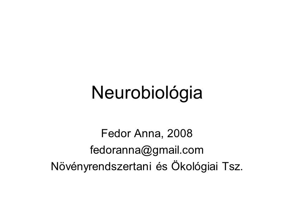 Neurobiológia Fedor Anna, 2008 fedoranna@gmail.com Növényrendszertani és Ökológiai Tsz.