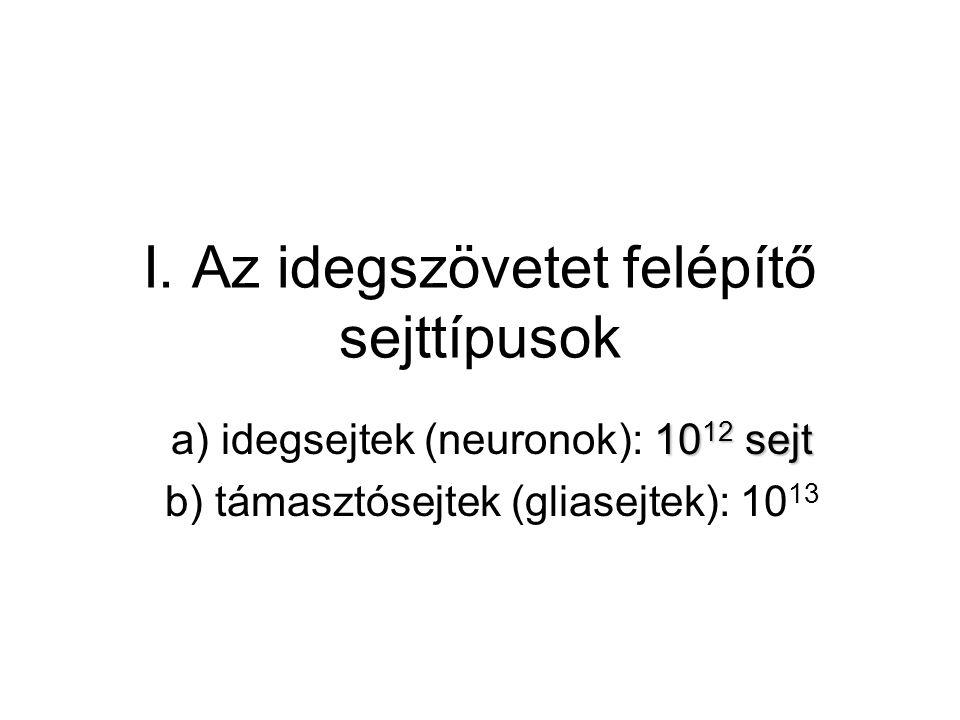 I. Az idegszövetet felépítő sejttípusok 10 12 sejt a) idegsejtek (neuronok): 10 12 sejt b) támasztósejtek (gliasejtek): 10 13