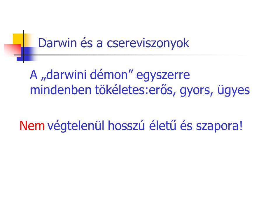 """Darwin és a csereviszonyok A """"darwini démon"""" egyszerre mindenben tökéletes:erős, gyors, ügyes Nemvégtelenül hosszú életű és szapora!"""