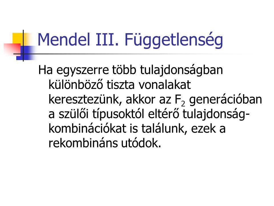 Mendel III. Függetlenség Ha egyszerre több tulajdonságban különböző tiszta vonalakat keresztezünk, akkor az F 2 generációban a szülői típusoktól eltér