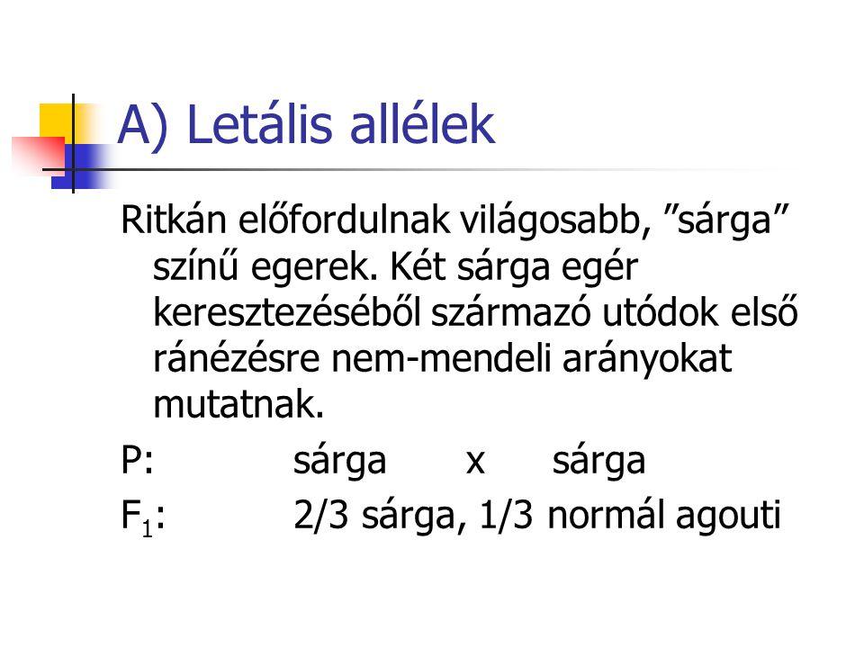 """A) Letális allélek Ritkán előfordulnak világosabb, """"sárga"""" színű egerek. Két sárga egér keresztezéséből származó utódok első ránézésre nem-mendeli ará"""