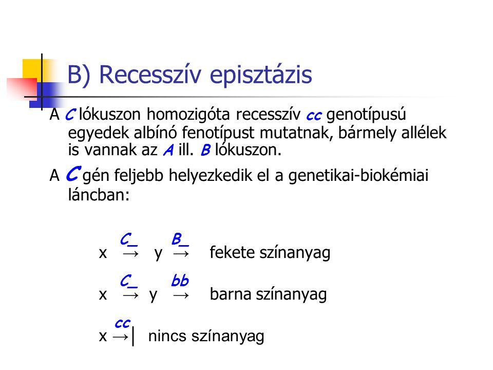 B) Recesszív episztázis A C lókuszon homozigóta recesszív cc genotípusú egyedek albínó fenotípust mutatnak, bármely allélek is vannak az A ill. B lóku