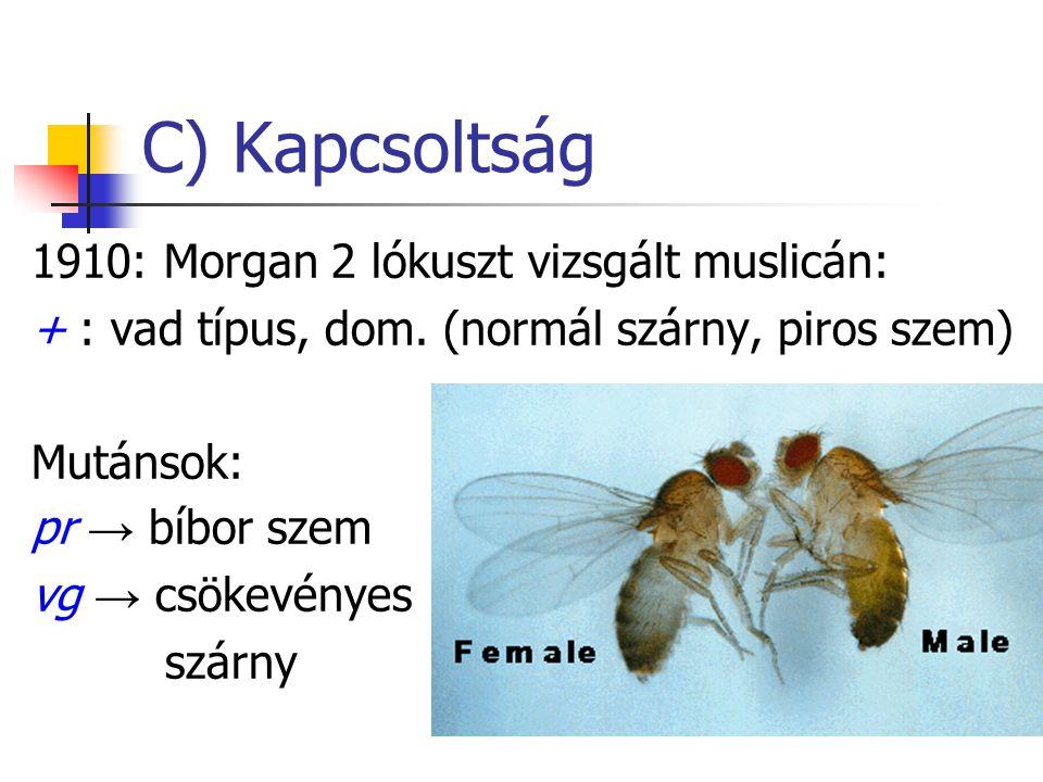 C) Kapcsoltság 1910: Morgan 2 lókuszt vizsgált muslicán: + : vad típus, dom. (normál szárny, piros szem) Mutánsok: pr → bíbor szem vg → csökevényes sz