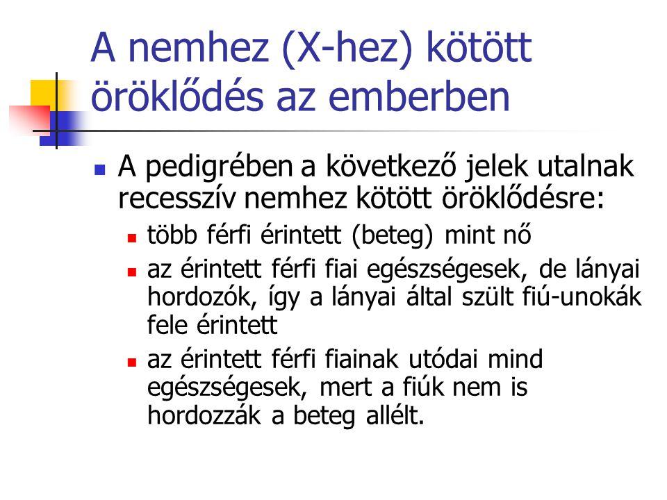A nemhez (X-hez) kötött öröklődés az emberben A pedigrében a következő jelek utalnak recesszív nemhez kötött öröklődésre: több férfi érintett (beteg)