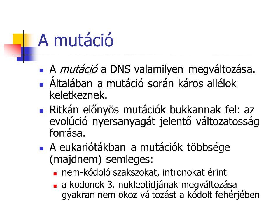 A mutáció A mutáció a DNS valamilyen megváltozása. Általában a mutáció során káros allélok keletkeznek. Ritkán előnyös mutációk bukkannak fel: az evol