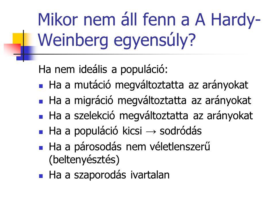 Mikor nem áll fenn a A Hardy- Weinberg egyensúly? Ha nem ideális a populáció: Ha a mutáció megváltoztatta az arányokat Ha a migráció megváltoztatta az
