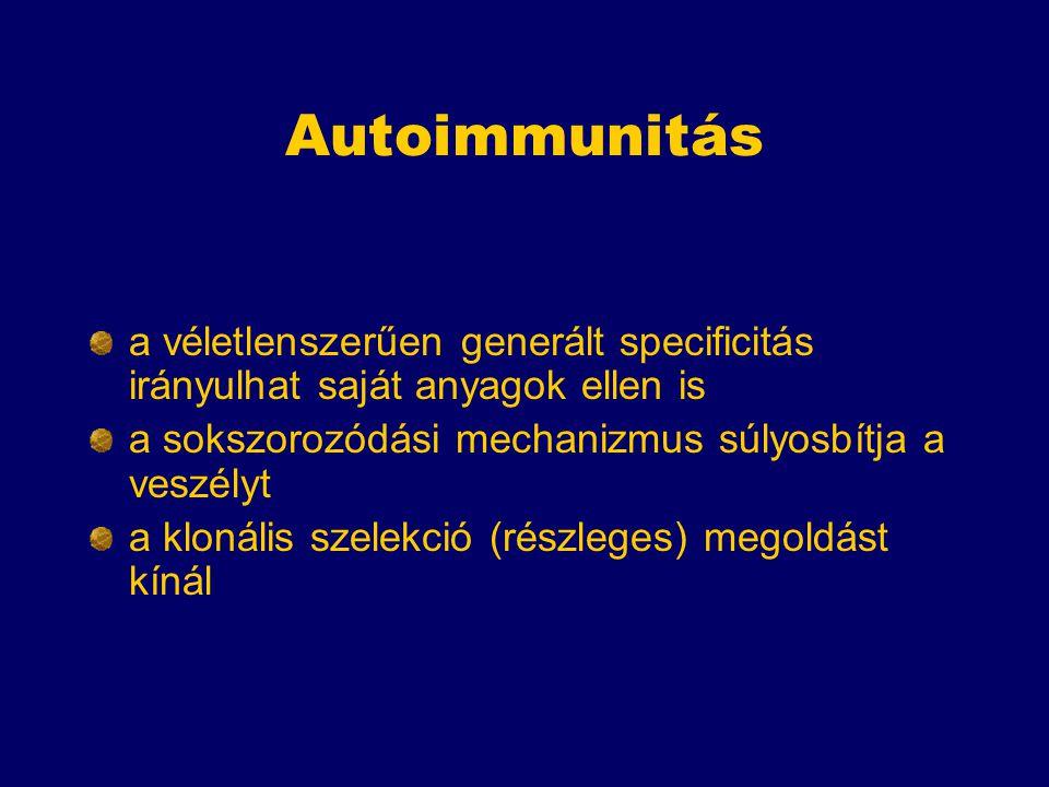 Autoimmunitás a véletlenszerűen generált specificitás irányulhat saját anyagok ellen is a sokszorozódási mechanizmus súlyosbítja a veszélyt a klonális szelekció (részleges) megoldást kínál