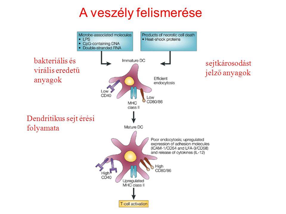 bakteriális és virális eredetű anyagok sejtkárosodást jelző anyagok Dendritikus sejt érési folyamata A veszély felismerése