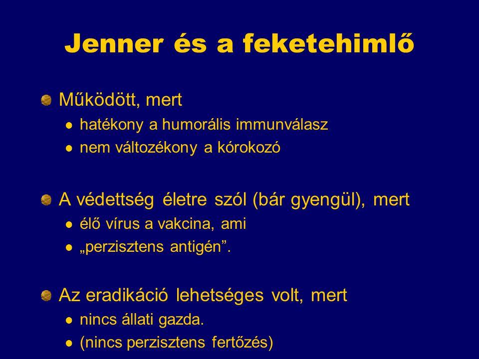 """Jenner és a feketehimlő Működött, mert hatékony a humorális immunválasz nem változékony a kórokozó A védettség életre szól (bár gyengül), mert élő vírus a vakcina, ami """"perzisztens antigén ."""