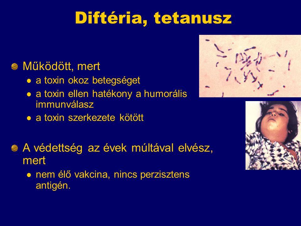 Diftéria, tetanusz Működött, mert a toxin okoz betegséget a toxin ellen hatékony a humorális immunválasz a toxin szerkezete kötött A védettség az évek múltával elvész, mert nem élő vakcina, nincs perzisztens antigén.