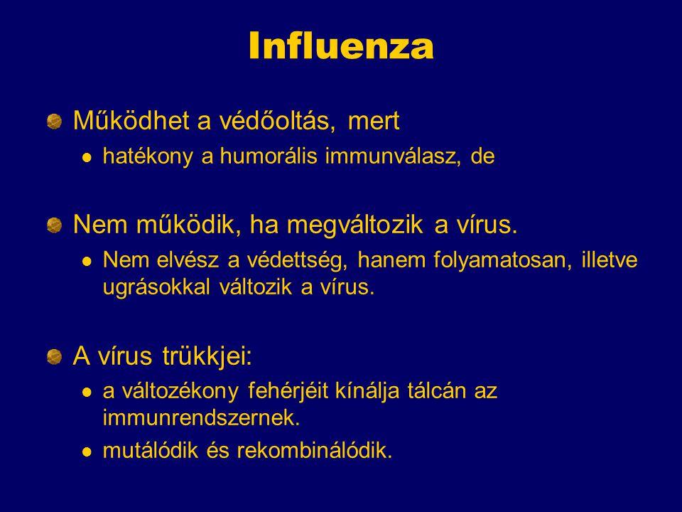 Influenza Működhet a védőoltás, mert hatékony a humorális immunválasz, de Nem működik, ha megváltozik a vírus.