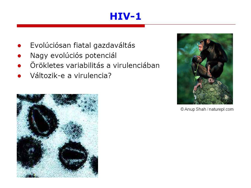 HIV-1 Evolúciósan fiatal gazdaváltás Nagy evolúciós potenciál Örökletes variabilitás a virulenciában Változik-e a virulencia.