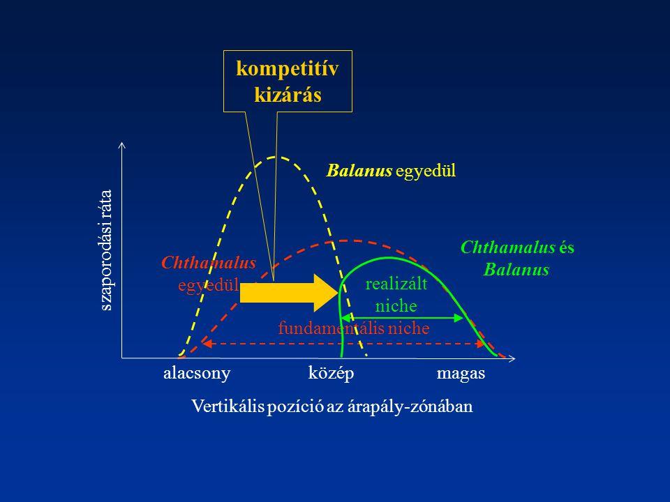Chthamalus egyedül fundamentális niche realizált niche Chthamalus és Balanus kompetitív kizárás alacsonymagasközép Vertikális pozíció az árapály-zónáb
