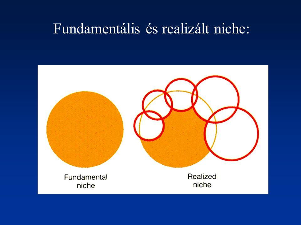 Fundamentális és realizált niche: