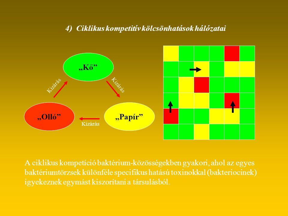 """4) Ciklikus kompetitív kölcsönhatások hálózatai """"Kő"""" """"Papír""""""""Olló"""" Kizárás A ciklikus kompetíció baktérium-közösségekben gyakori, ahol az egyes baktér"""