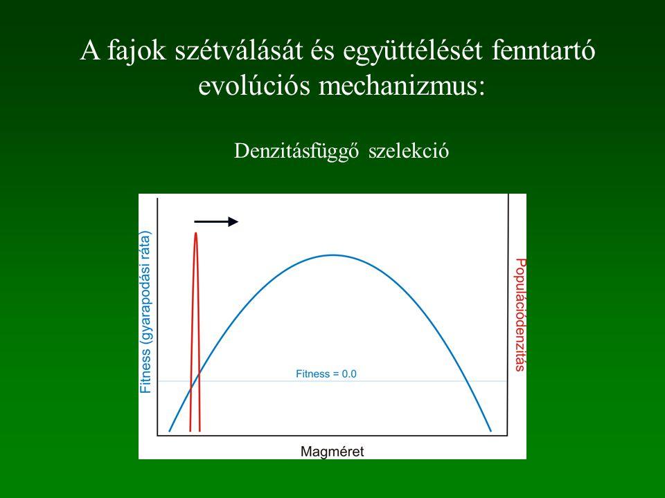 A fajok szétválását és együttélését fenntartó evolúciós mechanizmus: Denzitásfüggő szelekció