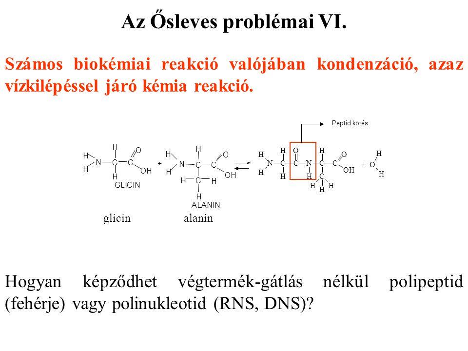 Számos biokémiai reakció valójában kondenzáció, azaz vízkilépéssel járó kémia reakció. Hogyan képződhet végtermék-gátlás nélkül polipeptid (fehérje) v