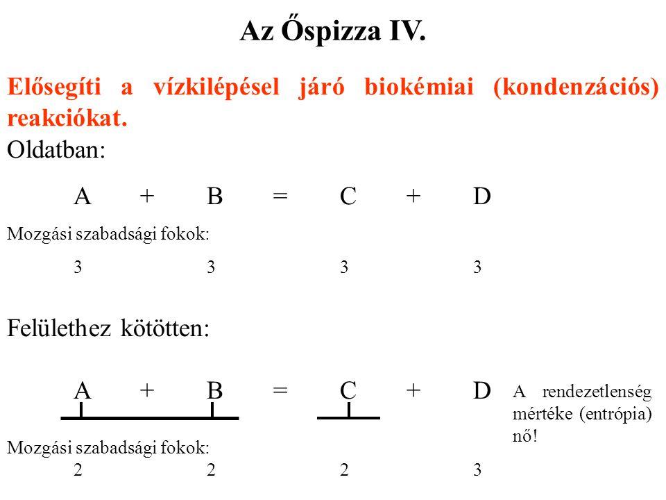 Elősegíti a vízkilépésel járó biokémiai (kondenzációs) reakciókat. Oldatban: A+B=C+DA+B=C+D Mozgási szabadsági fokok: 33333333 Felülethez kötötten: A+